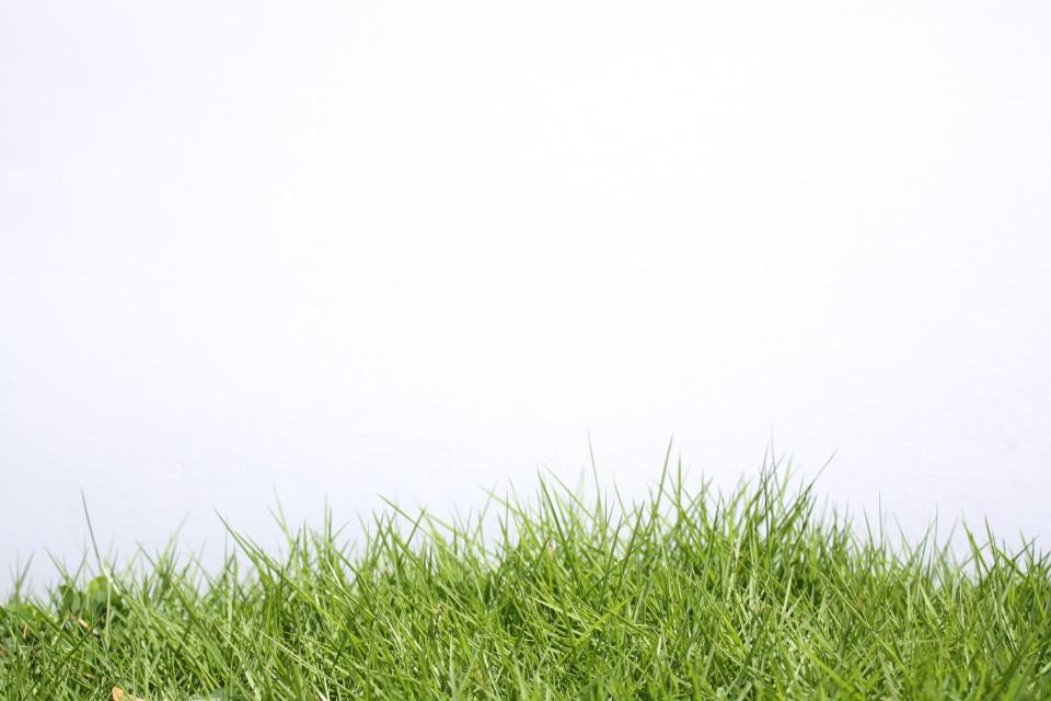 Nature-grass-image-slide-e1386765270953